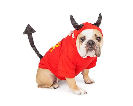 perros vestidos: Perro divertido de la raza Bulldog vistiendo un traje de diablo para Halloween