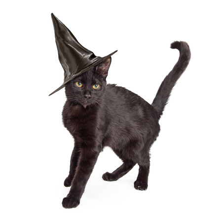 arching: Black short haired cat wearing a witch hat for Halloween, standing to the side and arching his back up Stock Photo