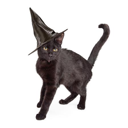 Negro gato de pelo corto que lleva un sombrero de bruja para Halloween, de pie a un lado y arqueando la espalda hasta Foto de archivo - 47230367