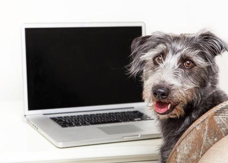 Gelukkig smerig terrier gemengd ras hond zitten naast een laptop computer met een leeg scherm om het imago van uw website in te voeren op