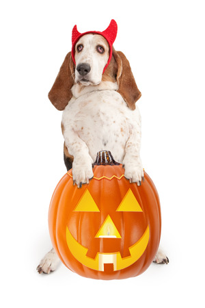 Basset Hound dog wearing devil horns. Isolated on white