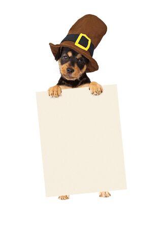chien: chiot mignon portant un chapeau de p�lerin Thanksgiving debout et tenant un signe blanc pour entrer votre message marketing sur Banque d'images
