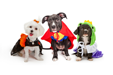 Three cute little puppy dogs dressed up in Halloween costumes including a witch, super hero and frog prince Foto de archivo