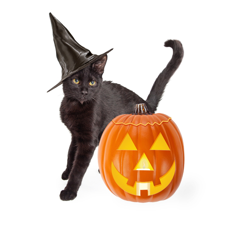 short haired: Black short haired cat wearing a witch hat and standing next to a carved Halloween pumpkin while arching his back up