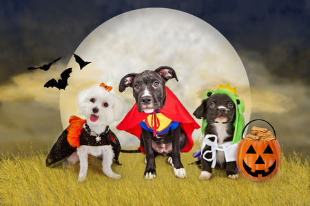 Three cute little puppy dogs dressed in Halloween costumes sitting in a field at night Stockfoto