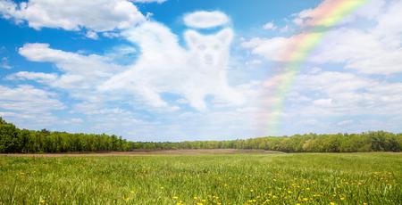 무지개 위를 통과하는 개 천사 모양의 구름과 함께 아름다운 열려 필드