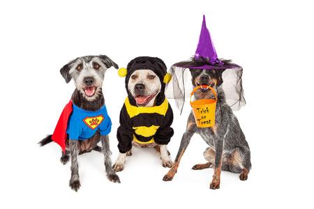 perros vestidos: Tres perros adorables que llevan los trajes de Halloween incluyendo superhéroe, abejorro y bruja
