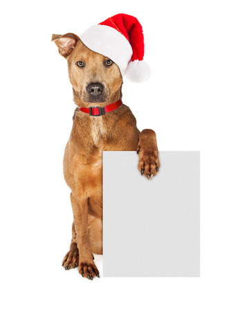 blank sign: Cute crossbreed dog wearing a Christmas Santa Claus hat and red collar holding a blank sign to enter your marketing message on