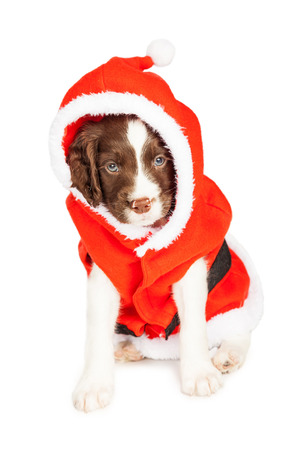 st nick: Cute puppy dressed in a Christmas Santa Claus outfit Stock Photo