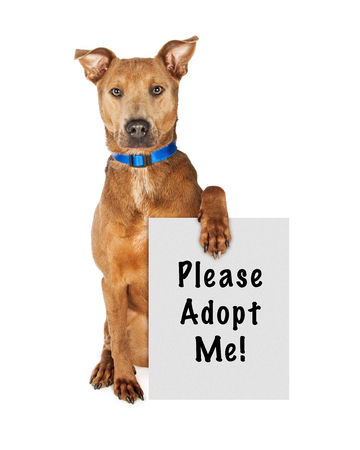 adopt: Cute large crossbreed rescue dog sitting and holding a sign that says Please Adopt Me Stock Photo