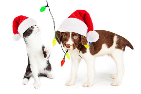 귀 엽 고 재미있는 작은 강아지와 새끼 고양이 크리스마스 조명의 문자열을 연주