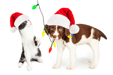 Cute and funny little puppy and kitten playing with a string of Christmas lights
