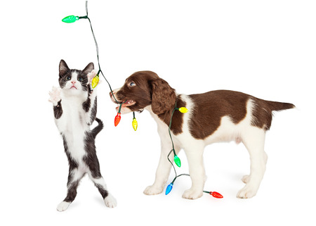 Funny photo of playful kitten and puppy playing with a string of Christmas lights Stock Photo