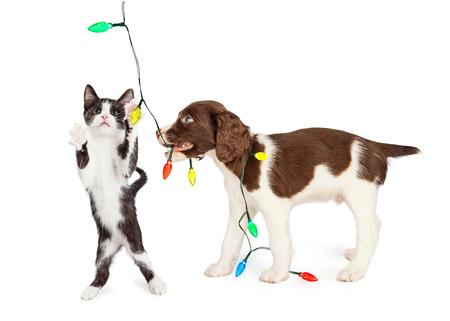 Grappige foto van speelse kitten en puppy spelen met een koord van de lichten van Kerstmis