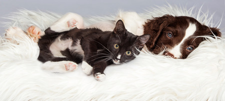 Puppy and Kitten Laying in Basket Together on a white fur blanket