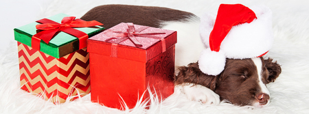 st nick: Cute puppy sleeping next to wrapped presents wearing Santa Claus hat. Sized to fit popular social media cover.