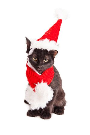 st nick: Adorable little black kitten wearing a red Christmas Santa Claus hat and scarf Stock Photo