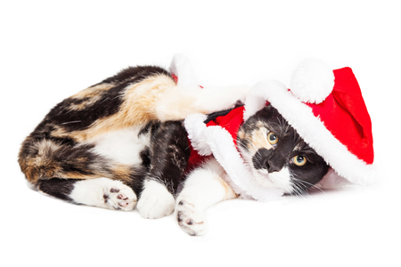 Adorable Playful Little Kitten Laying Over White Wearing Christmas Stock Photo Picture And Royalty Free Image Image 48430767