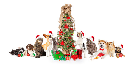 Collection of cats and dogs in a row together around a Christmas tree with gifts Stock Photo