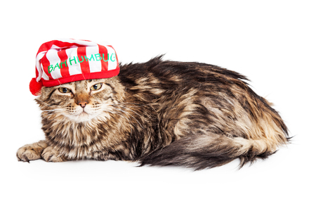 Funny photo of an angry cat wearing a Christmas pajama cap with the words Bah Humbug Stock Photo