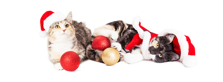 st nick: Two cute baby kittens wearing Christmas Santa Claus outfits laying down together playing with tree ornaments Stock Photo