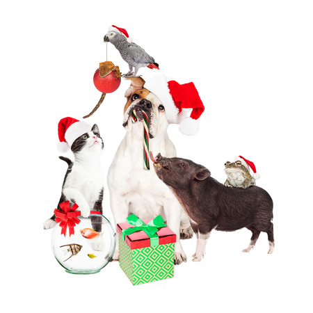 christmas frog: Funny Christmas scene photo of a dog, cat, pig, frog, lizard, bird and fish interacting together Stock Photo