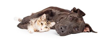 Vriendelijke Pit Bull gemengd ras hond tot en knuffelen met een klein katje
