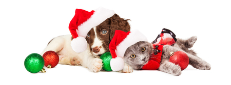 Cute little puppy and kitten wearing Christmas outfits and Santa Claus hats laying together Stockfoto