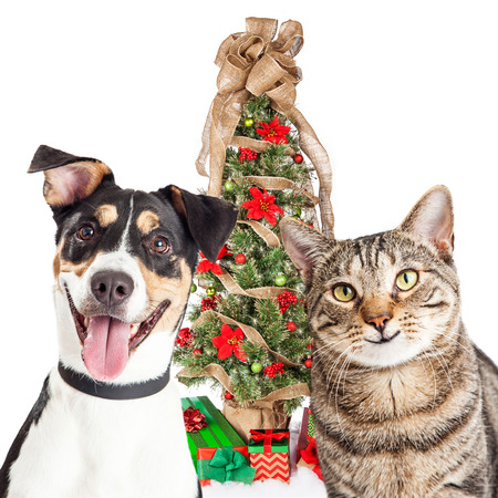 Closeup of happy and smiling cat and dog in front of a pretty decorated Christmas tree