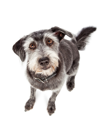 obedient: Cute and Obedient Dog Sitting Looking Up