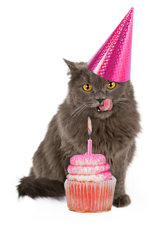 Funny photo of a cute cat wearing a pink birthday party hat with her tongue sticking out licking lips in anticipation of eating a cupcake. Stockfoto