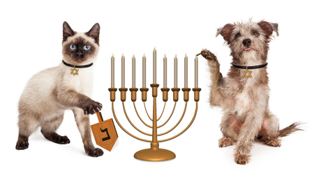 Cute puppy dog lighting a menorah candelabrum and a kitten spinning a wooden dreidel in celebration of the Jewish Hanukkah holiday
