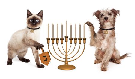 Netter Welpenhund eine Menora Kerzenleuchter und ein Kätzchen ein hölzernes dreidel in der Feier des jüdischen Chanukka-Feiertagsbeleuchtung Spinnen