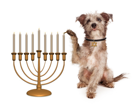 jewish star: Cute dog wearing a collar with a Jewish star tag lighting candles on a Hanukkah celebration menorah