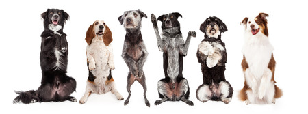 smile please: A row of six dogs together - All are sitting up and in a begging position with happy expressions. Image sized to fit a popular social media timeline cover photo placeholder.