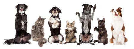 猫と犬一緒に座っていると物乞いの行。人気のソーシャル メディアのタイムライン カバー写真プレース ホルダーに合うようにサイズの画像。 写真素材