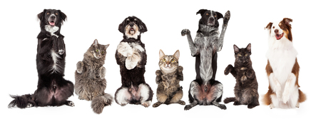 Row of cats and dogs together sitting up and begging. Image sized to fit a popular social media timeline cover photo placeholder.