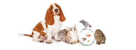 Group of domestic pets together including a dog, cat, fish, bird and bunny