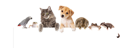 Row of domestic pets hanging over a blank white banner. Image sized to fit a popular social media banner photo placeholder.