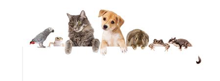 Rij van huisdieren hangend over een blanco witte banner. Beeldformaat om te passen bij een populaire social media banner photo placeholder.