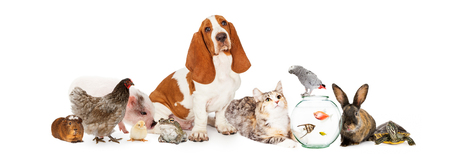 Large collection of domestic pets interacting together. Image sized to fit a popular social media timeline cover photo placeholder.