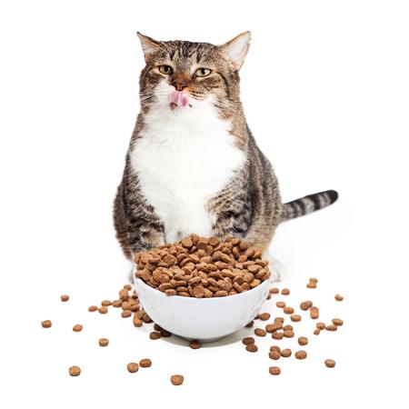 Bergewichtige Erwachsene Katze sitzt mit einem großen überquellenden Schüssel der trockenen Lebensmittel, während seine Lippen lecken Standard-Bild - 50651596