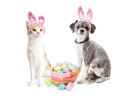 Cute dog and cat together wearing Easter Bunny ears with basket filled with pastel color eggs
