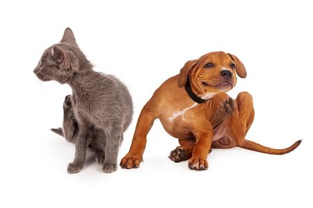 perrito: Un pequeño gatito y el perrito sentados juntos en un fondo blanco y el rascado