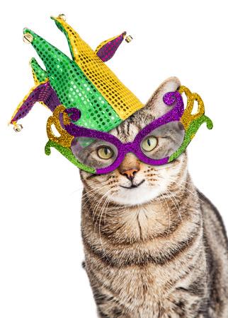 마디 그라스 마스크와 광대 모자를 쓰고 행복한 고양이의 재미있는 사진