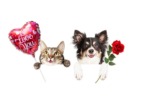 valentine cat: Happy cat and dog hanging over blank white banner holding a flower and balloon saying I Love You