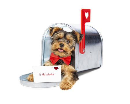 Fantastic Valentine Bow Adorable Dog - 51718846-cute-little-puppy-wearing-red-bow-tie-delivering-valentine-s-day-card-out-of-a-mailbox  Snapshot_311310  .jpg?ver\u003d6