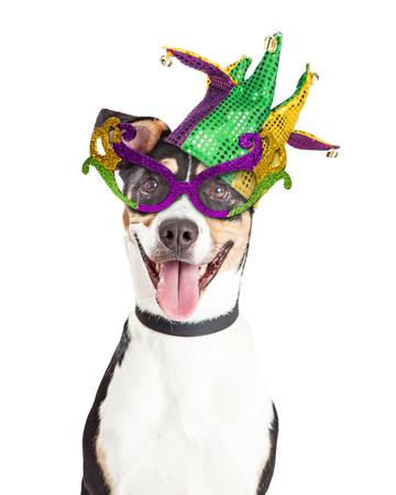 마디 그라 안경과 광대 모자를 쓰고 행복하고 웃는 강아지의 재미있는 사진