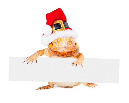 dragon vertical: Red color bearded dragon standing up wearing a Christmas Santa Claus hat holding a vertical blank sign