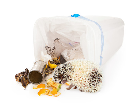tipped: Hedgehog getting into a tipped over garbage basket